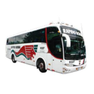 Bus Rápido Ochoa - REY DORADO