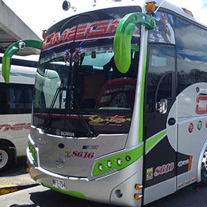 Bus Omega - Bus Senior
